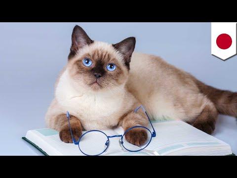 Penelitian membuktikan kucing tahu ketika dipanggil namanya - TomoNews
