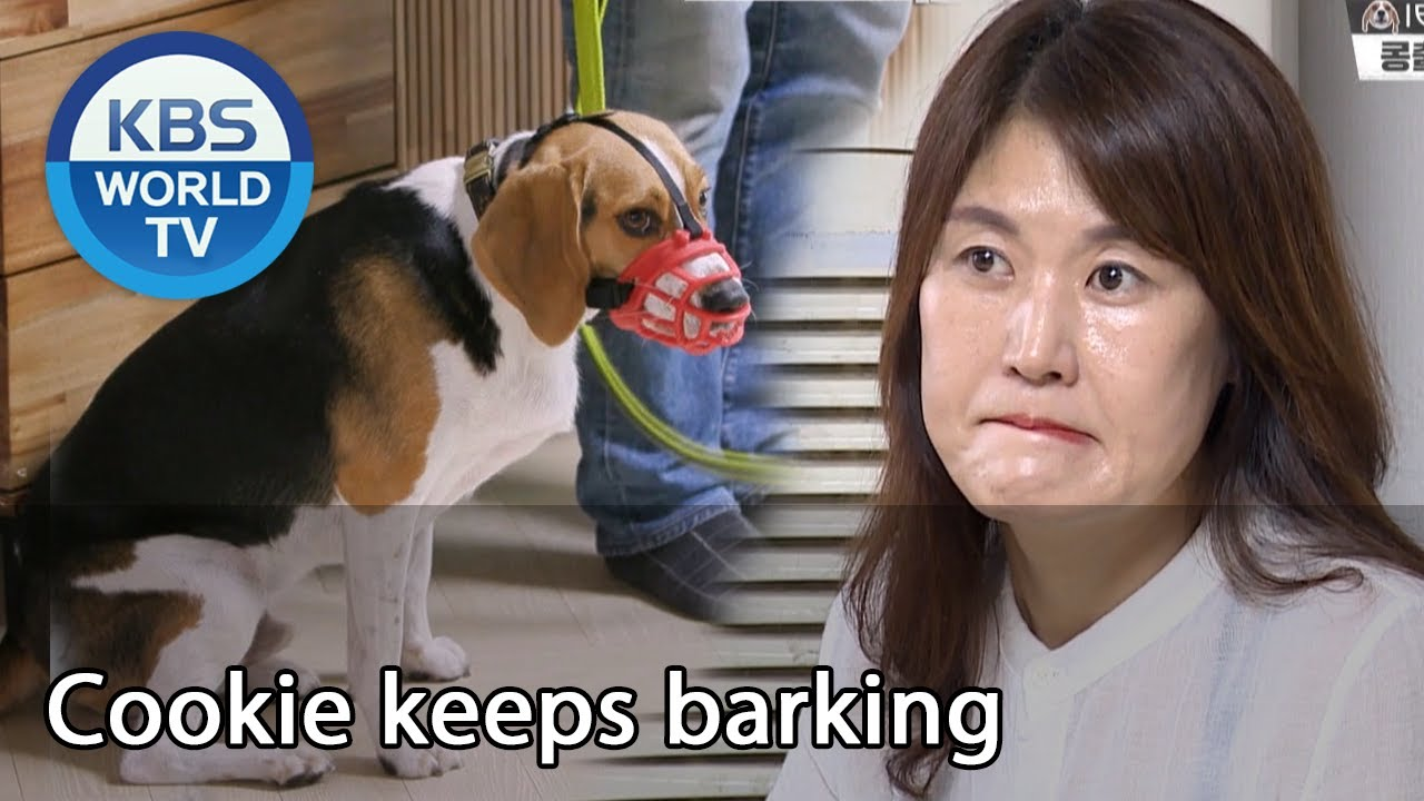 Cookie keeps barking [Dogs are incredible/ENG/2020.08.05]