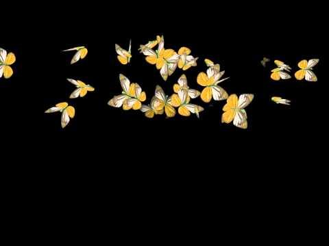 Футаж Бабочки на чёрном фоне Ал  Ковалюк