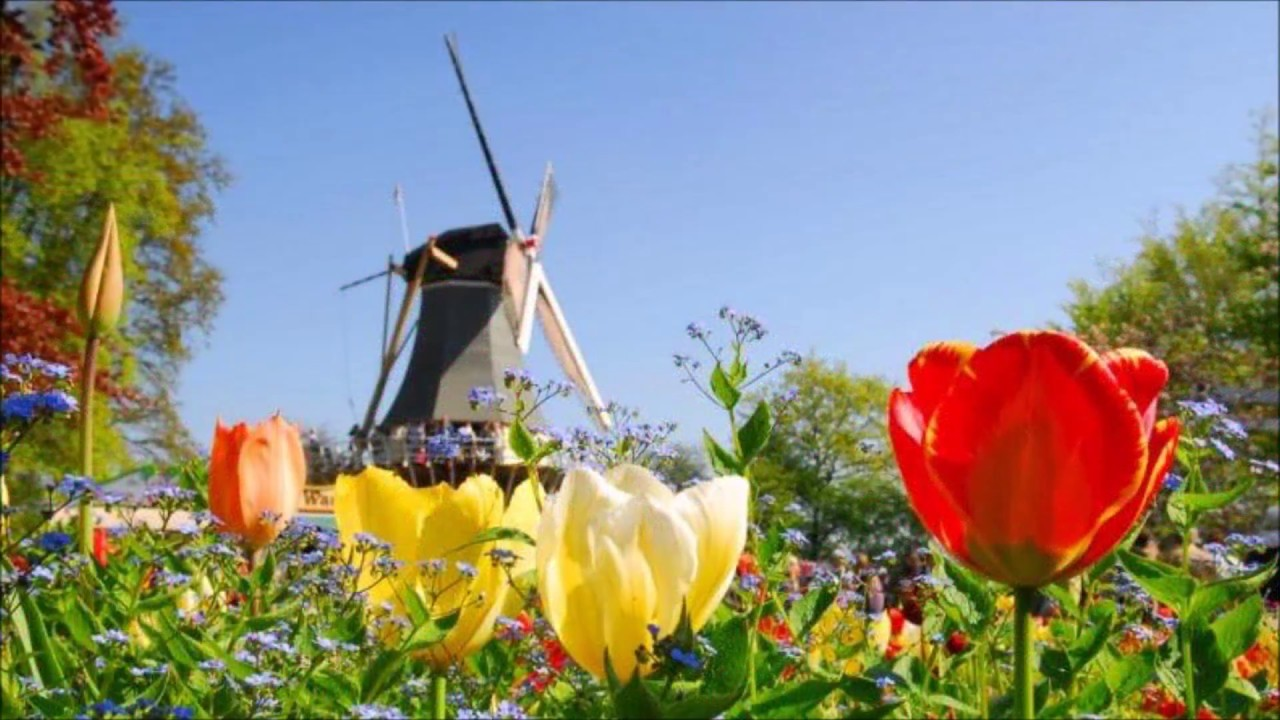 rvar Kristjnsson Tulips from Amsterdam Tulpen aus Amsterdam  YouTube