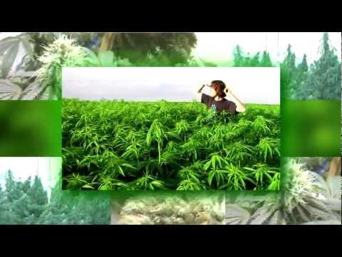 Macka B - Land Of Sensi HD - Marijuana is not just for smoking
