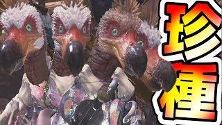 【MHW】珍行動を繰り広げるクルルヤックたちの日常。特殊生態調査へ向かえ!!!【モンハンワールド実況】 thumbnail