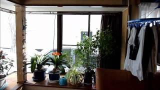 2011 3/11 JAPAN  Earthquake 地震発生時 福島県会津若松市 FUKUSHIMA AIZUWAKAMATSU