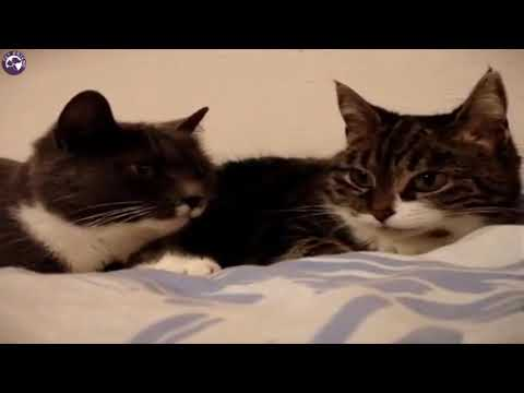 Funny Talking Two Cats Video - by Pet Friend