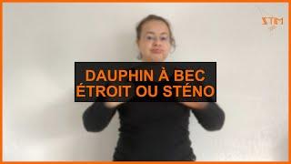 BIOLOGIE MARIN - Dauphin à bec étroit ou Sténo