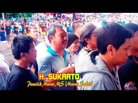 PRESIDEN CUP IV 2016 : Wajah Kemenangan Murai Batu MS  Milik H. Sukarto  Dapat 1 Unit Mobil