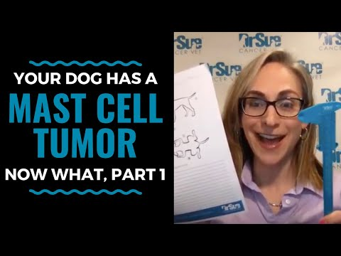 Your Dog Has A Mast Cell Tumor, Now What, Part One: Vlog 63