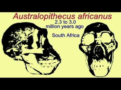 PL3: HOMINIDS: AUSTRALOPITHECUS AFRICANUS.avi