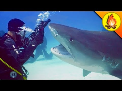 Nearly CHOMPED by a SHARK!