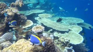 Un momento magico nella barriera corallina - Atollo Ari Sud - Maldive