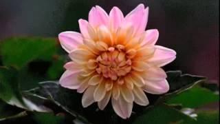 Viral Thottal Viriyunna Pen Poove..!!(Mini Anand)