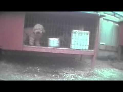 Un minuto de realidad Fabricas de cachorros