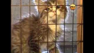 Акция в приюте для животных
