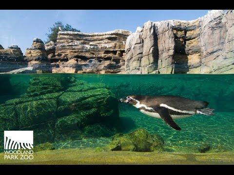 Visite, Woodland park zoo (Seattle)