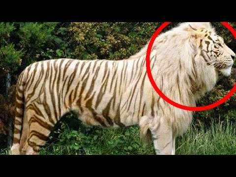 top-10-hybrid-animals-that-actually-exist
