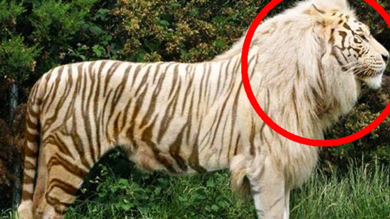 top 10 hybrid animals that actually exist youtube
