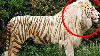 Top 10 Hybrid Animals That Actually Exist