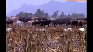 Мир на пороге продовольственного кризиса