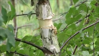 Остерський військовий лісгосп нові методи догляду за лісом