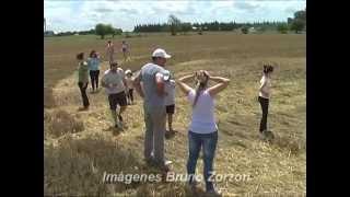Extrañas marcas en campo de trigo - Malabrigo Santa Fe