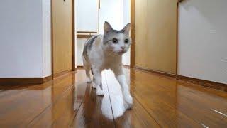 深夜にハイテンションになり廊下を駆け回る猫、ようやく寝る