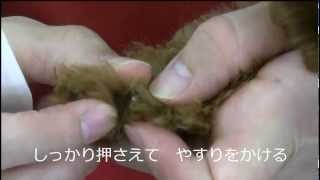 トイプードルの子犬を使って爪切りの仕方を解説致します。 トイプードル...