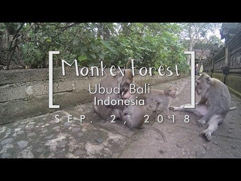 Monkey Forest - Ubud, Bali | VLOG 8