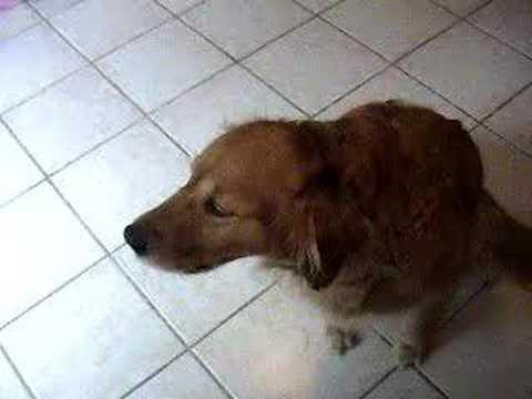My Dog~