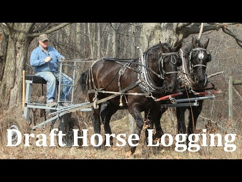 Logging with Draft Horses at Riceland Meadows Farm