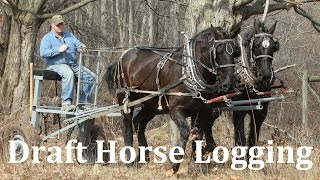 Logging with Draft Horses at Riceland Meadows Farm thumbnail