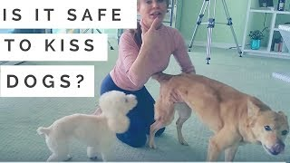 Is It Safe to Kiss Pets? Dog Functional Behavior
