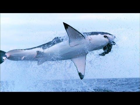 The Secrets of Sharks' Eyes