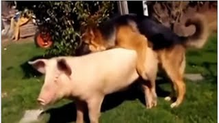 incredible , animals mating fail compilation , seduction tactics , psychotic lovers in nature.part 4