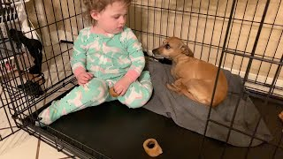 Baby Ayla thinks she's a dog! Day Thirteen! Advent Calendar Christmas 2018! (yellies)