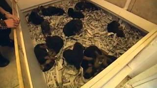 832 K9's Deputy Dogs Hound Dog Training
