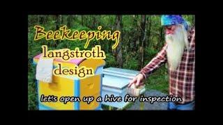 Beekeeping Langstroth Beehive