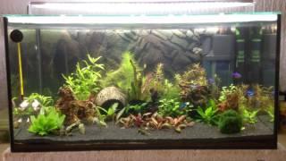 my tropical fishtank 54l