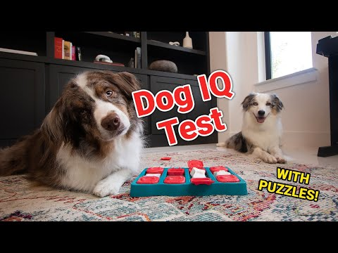 How Smart Is My Dog? (Taking A Dog IQ Test!)