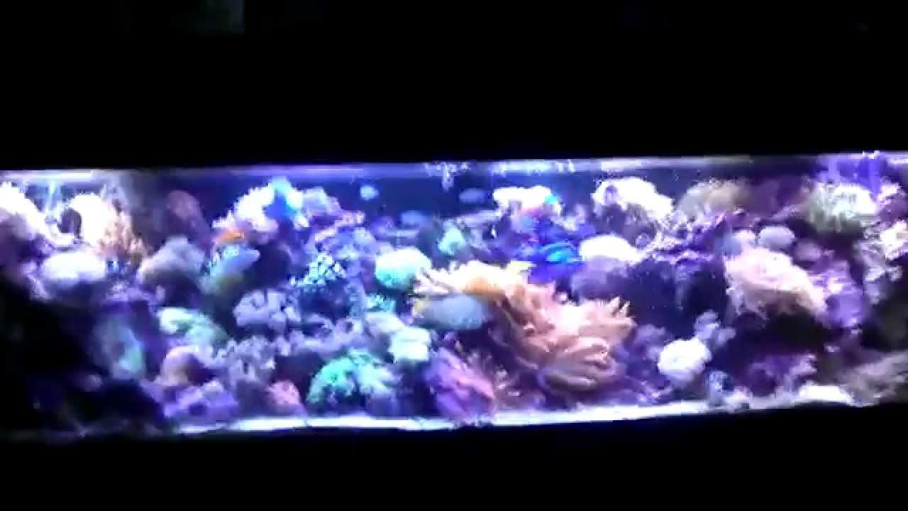 foot 125 gallon reef tank   YouTube