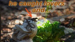 Super-funny - Lizards Just Like Humans :))  4K