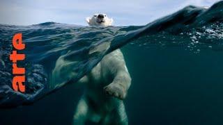 +/- 5 Meter - Unter dem Eis tauchen | 360° Video | ARTE