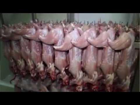 Видео Rabbit proof fence belonging essay