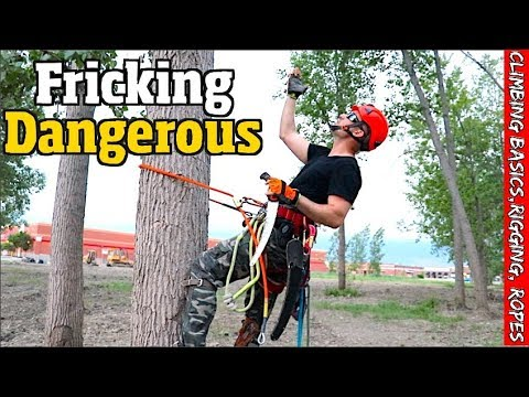 Tree Work For The Beginner.  How To Climb, Set Rigging, Spurs, Ropes & Harness.
