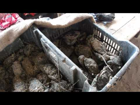 Mercado  do Peixe - Maputo - Moçambique
