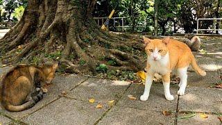 公園に行ったら猫たちは食事中でした