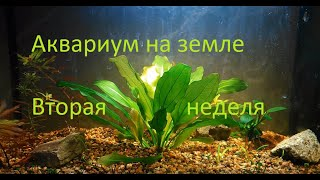 Аквариум на грунте для кактусов(вторая неделя)