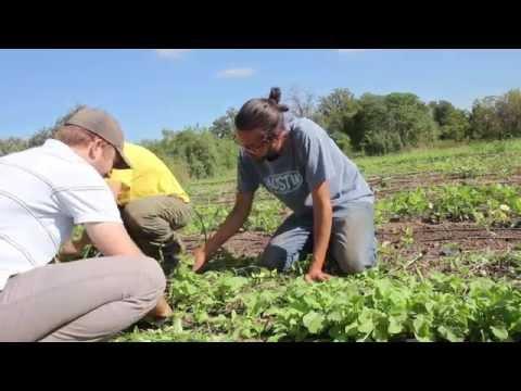 Get Involved: Farmshare Austin