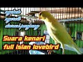 Suara Kenari Gacor Ngerol Panjang Ngekek Full Isian Lovebird  Mp3 - Mp4 Download