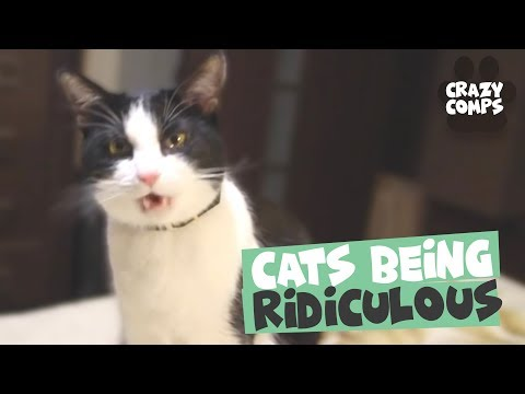 Cats Being Hilarious Compilation - Cats are Jerks