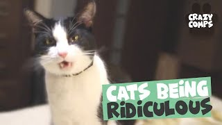 Cats Being Hilarious Compilation - Cats are Jerks 😂😂😂